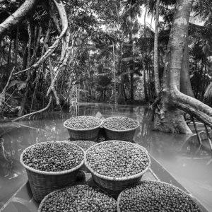 Amazonia-1024x682